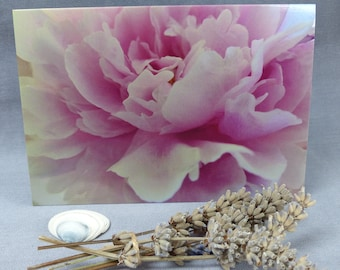 Delicate Pink Peoni, Photographic Greeting Card, Notecard, Floral, Botanical, Nature