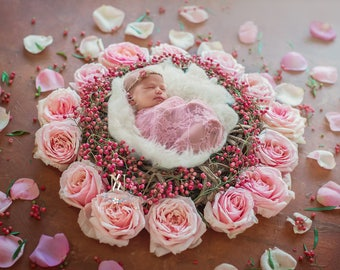 Newborn Digital Backdrop/ Prop / Photography /  Fresh flowers  (Backlit Rose)