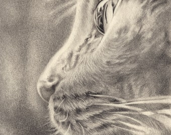 Custom Pet Portrait in Graphite - 8x8 or 8x10