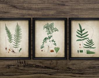 Green Plant Print Set of 3 - Vintage Plant Botanical Art Decor - Digital Art - Printable Art - Set Of Three Prints #174 - INSTANT DOWNLOAD