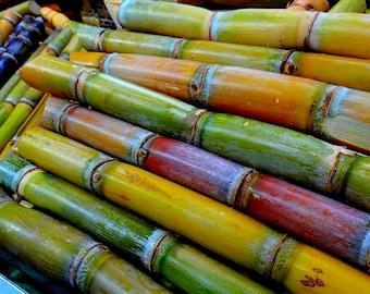 600 Sugar Cane Seeds (XL)
