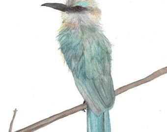 Aqua Bee Eater, watercolor painting, art print