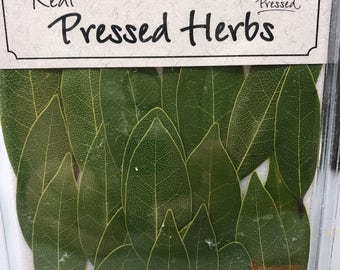 Bay leaves 20 count