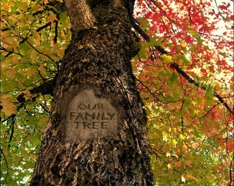 Our Family Tree, Digital tree carving with message, Fall Tree-Looking Up, Instant download, Under 5 dollars, Display family photos, Leaves