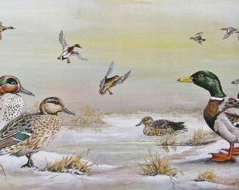 Ducks on a snowy lake - mallard, teal and wigeon