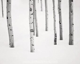 Rustic Black and White Photo, Cabin Art, Aspen Tree Photo, Living Room Wall Art, Minimalist Art, Black and White Print, Colorado Photography