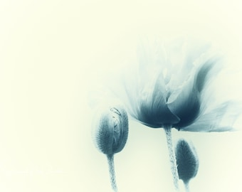 Blue Poppy III