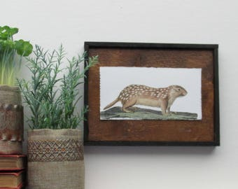 """home decor - """"Ground Squirrel""""- farmhouse - wall art - country chic"""