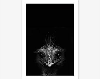 Photography Prints, Emu Print, Black and White Wall Art, Animal Prints for Nursery, Modern Wall Art, Australian Native, Bird Print