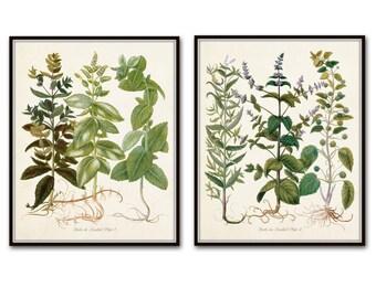 Herbs de Menthol Print Set, Antique Herb Prints, Botanical Prints, Herb Print, Giclee, Wall Art, Kitchen Art, Antique Botanicals, Herbier