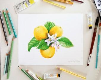 Lemons with Flowers and Leaves // 8x10 Illustration, Art Print, food, botany, farmhouse decor