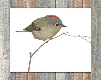 Ruby-crowned Kinglet Bird Print