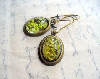 Green Dry Flower Oval Earrings, Green Jewelry, Antique Brass Jewelry, Resin Oval Dangle Earring, Dried Flower Earring, DLAbeaddesign