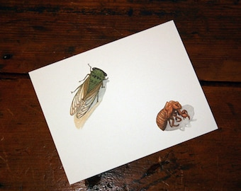 Cicada and Shell Note Card