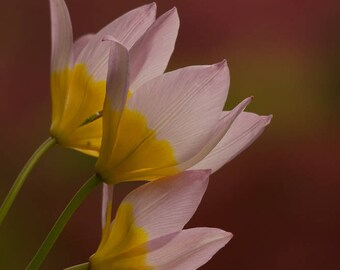 Pink Flower Photography, Natures Image, Wall Art, Flower Bouquet, Fine Art Print