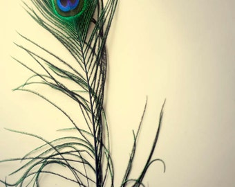 Peacock feather, delicate, modern bedroom decor, romantic, blue and green