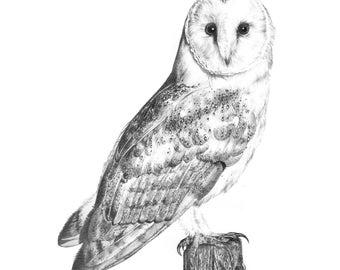 A4 barnowl print | animal print | nursery owl print | wildlife art