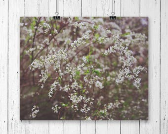 Little white flower blossoms on tangled branches, fine art photography print, nature photography print, art print (white branch blossoms 01)