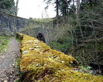 Diana's Grove at Blair Castle in Scotland print