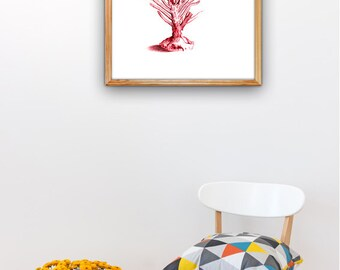 Red Sea fan coral III A3 plus sized, Poster Wall Art Antique Illustration coral poster-sea life print Beach house  SWC092A3P