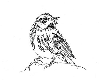 Bird Art - Giclee Print - Warbler - songbird, line drawing, pen ink sketch