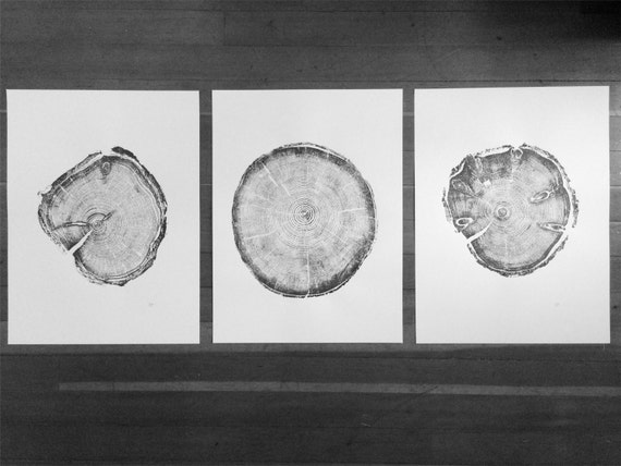 Utah Tree ring prints, Triptych art set, Real tree ring art, set of 3 prints, cabin wall art, Christmas Tree, Christmas tree ring prints