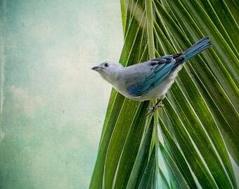 Bird Photography, Costa Rica, Wildlife Print, Bird Art Print, Tanagers, Tropical Art, Bird Print, Small Birds, Wildlife Photography