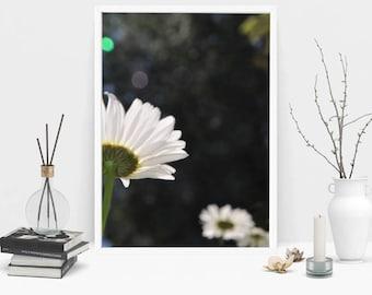 Daisy Photography Print, Wall Art, Color Print, Printable Art, Instant Digital Download Print