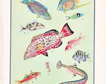 vintage fish print, of 'Tropical Fish' a page from a 1930's dictionary, cottage style vintage home decor.