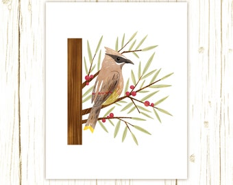 Cedar Waxwing Print -- bird art -- bird art 52 birds stephanie fizer coleman illustration red yellow brown