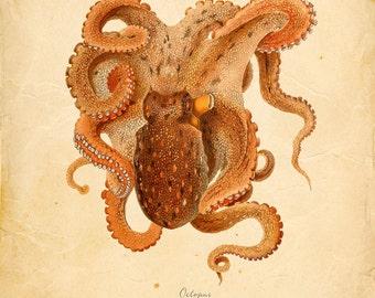 Vintage Octopus Squid Print 8x10 P262