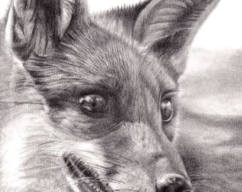 Fox Animal Print Graphite Pencil Drawing A4