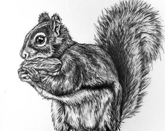 Squirrel Pencil Drawing - 80