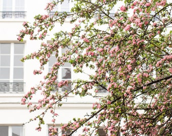 Paris Photography, Spring in Paris, Pink Cherry Blossoms, Paris Art, Photograph, Nature, Paris Home Decor, Blush Pink, April in Paris