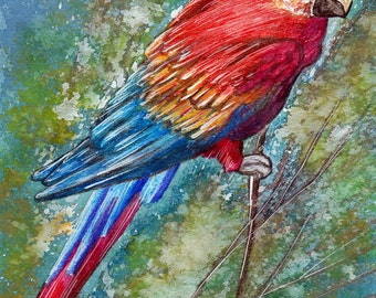 Parrot. Original Painting, Watercolor, Handpainted, 7,6 x11,6 inch. NOT a print. Tatiana-Art. parrot,red,lovely bird