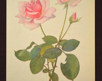 Pink Rose Print Rose Flower Print Floral Plate