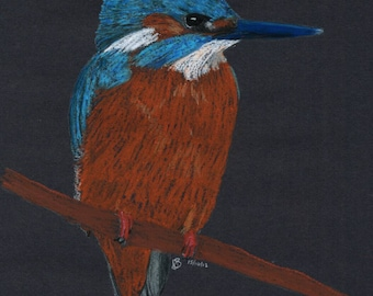 A3 Kingfisher in oil pastels