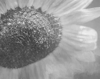 Black and White Painterly Sunflower Photograph Digital Download