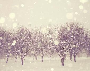 Winter Art: SnowFall Fine Art Photography, Snow Bokeh, Nature Photography, Tree Wall Art Nature Winter Wall Art Woodland Winter Forest Print
