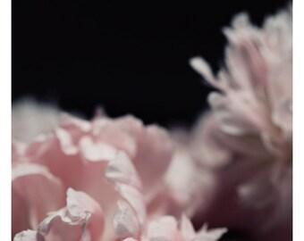 Nature Photograph - Peony Photograph - Flower Photograph - Spring - Perennial - Fine Art Photograph - Alicia Bock - Floral Art - Custom