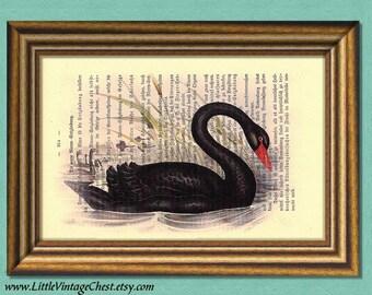 THE BLACK SWAN Dictionary Art Print - Digital Art - Wall Art