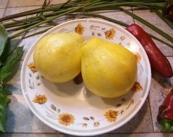 Squash Plant, Lemon Squash Bug Resistant Organic Summer