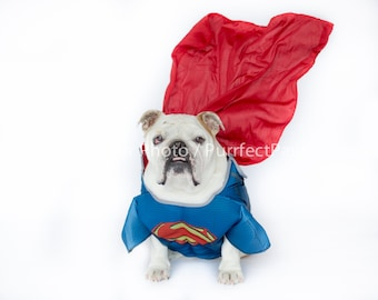 Superman English Bulldog Print, Fine Art Photography Print, Purrfect Pawtrait Pet Photography, Animal Photography