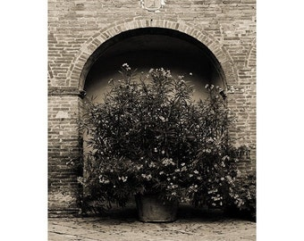 """Fine Art Sepia Photography of Tuscany - """"Oleander In a Tuscan Courtyard in Sepia"""""""