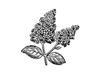 Lilac flower rubber stamp