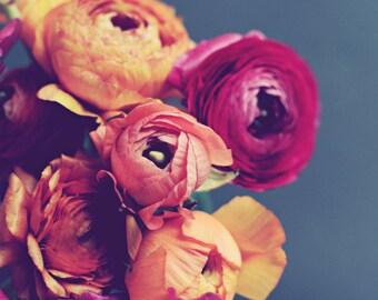 "Ranunculus Flower Still Life Botanical Art Print, Orange Magenta Pink Floral Wall Art, Dark Gray, Bedroom Art, Square Print ""Loveliness"""