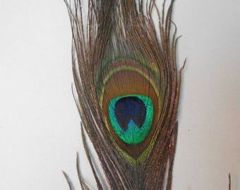 Beautiful feather Peacock - sold individually