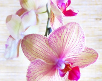"Vibrant Floral ""Orchids"" Fine Art Photographic Print in Various Sizes"