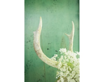 Antlers Print - Deer Antlers and Queen Anne's Lace Fine Art Photograph - Pretty Gothic Art