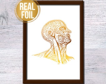 Human head anatomical poster Human head gold foil print Scientific illustration Medical real foil poster Medical office wall decoration G274